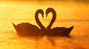 Kaip atskirti meilę nuo aistros?