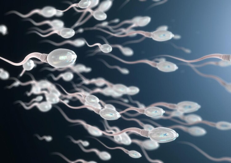 3d-image-of-sperm-cells.jpg